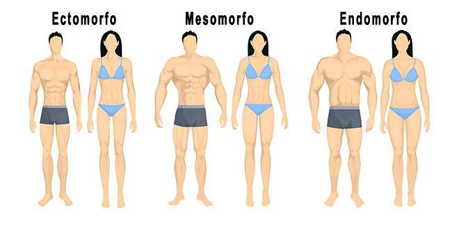 mesomorfo